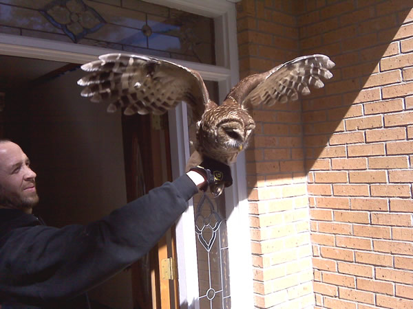 Owl rescued and released from a house in Stone Mountain