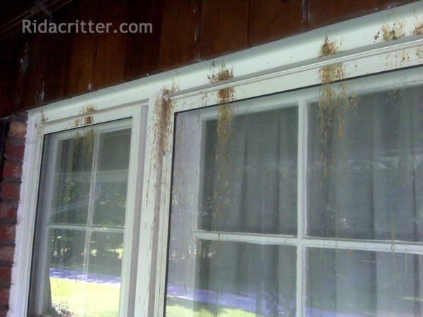 Carpenter Bee Removal And Damage Repair Macon Albany