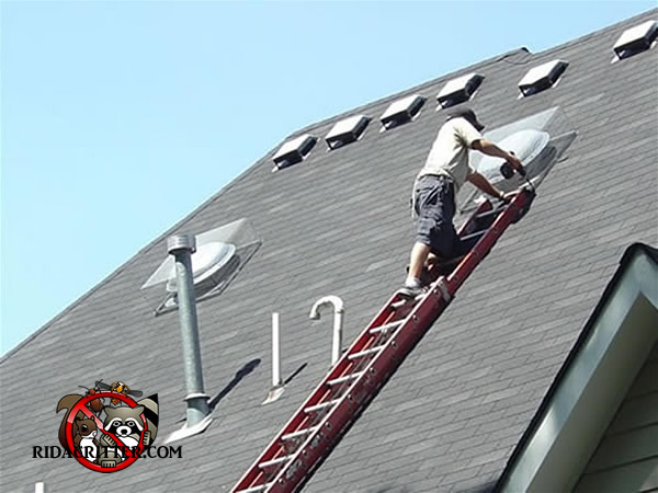 Animal-proofing the roof of a house.