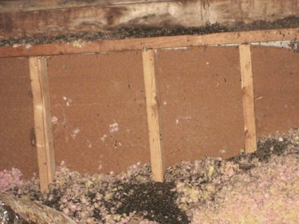 Flying squirrel droppings in an attic in Marietta