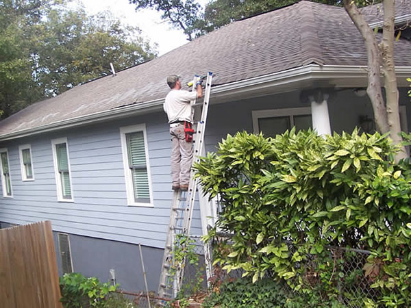 Rat Removal And Control In Macon Albany And Valdosta